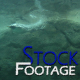 &amp;quot;Penguins 2&amp;quot; Full HD Stock Footage 1920x1080 - VideoHive Item for Sale
