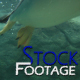 &amp;quot;Penguins 5&amp;quot; Full HD Stock Footage 1920x1080 - VideoHive Item for Sale