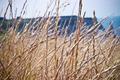 Wheat fields - PhotoDune Item for Sale