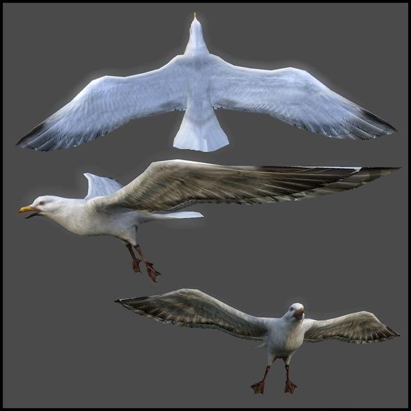 3DOcean Seagull 3217094