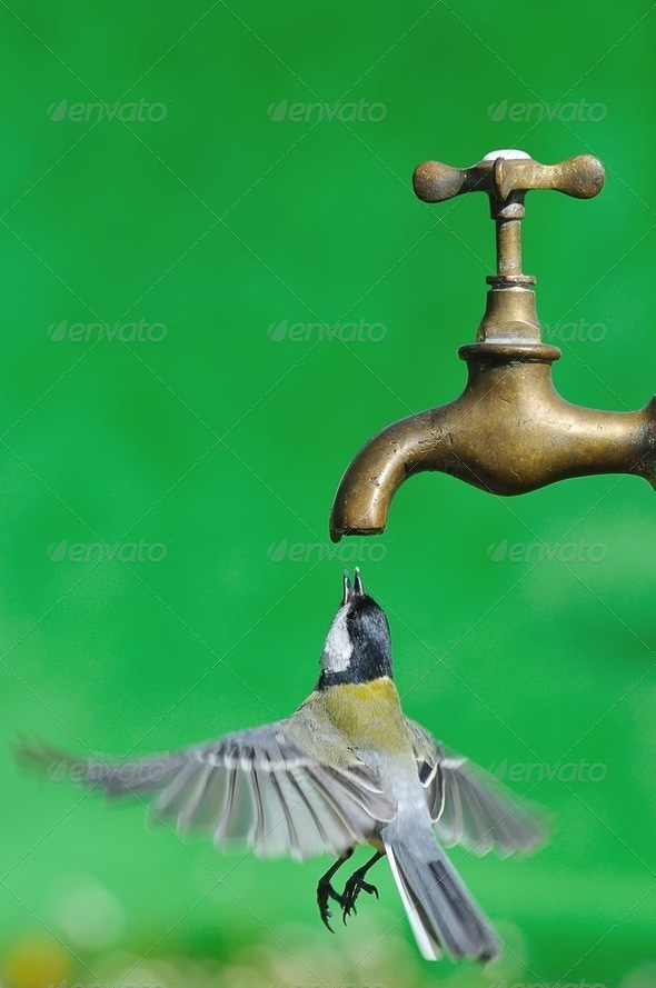 Bird. - Stock Photo - Images