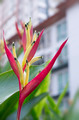 Tropical Flower Bird Of Paradise - PhotoDune Item for Sale