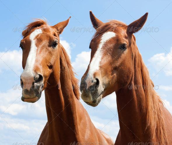 PhotoDune Horses 3228215