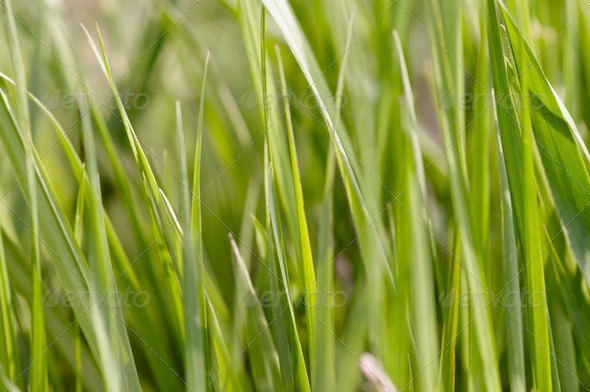 spring grass - Stock Photo - Images