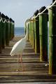 Egret - PhotoDune Item for Sale