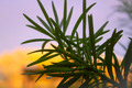 Plant Against Purple Sky at Sunset - PhotoDune Item for Sale