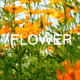 Yellow Flowers 2 - VideoHive Item for Sale
