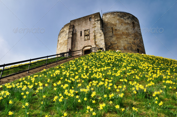 Cliffords Tower With Spring Daffodils - Stock Photo - Images