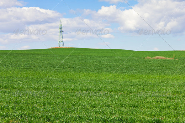 Green wheat field  - Stock Photo - Images