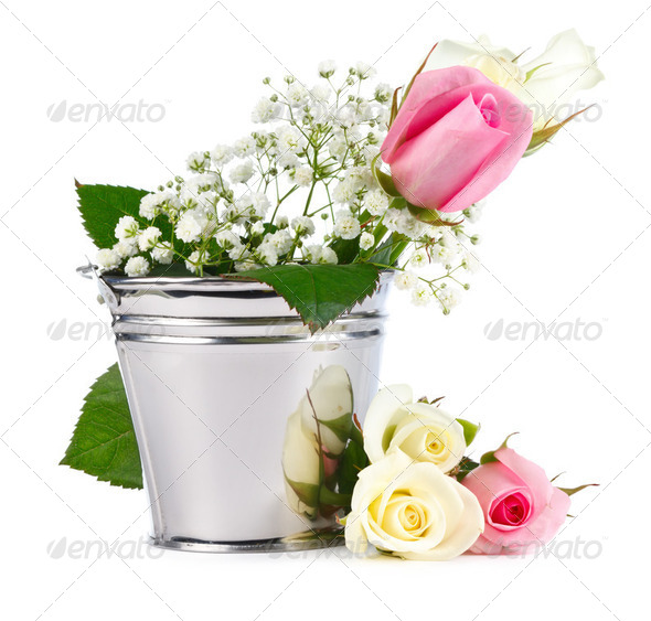 Beautiful Roses in metallic bucket isolated on white background  - Stock Photo - Images
