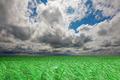 Green wheat field under an cloudy sky. High Quality XXL! - PhotoDune Item for Sale