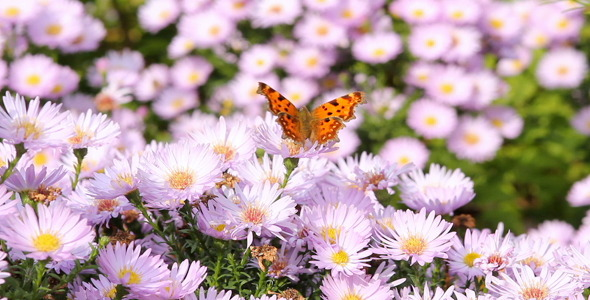 Butterfly VideoHive Stock Footage  Nature 336782