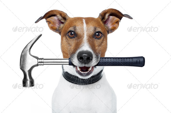 handyman dog with a hammer - Stock Photo - Images