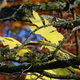 Autumn leaves 04 - PhotoDune Item for Sale