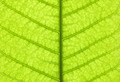 Leaf texture - PhotoDune Item for Sale