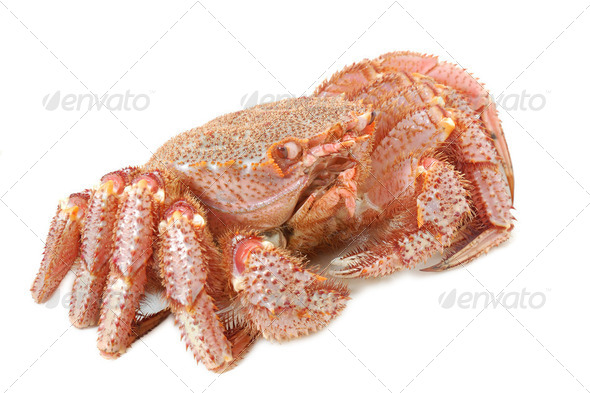Alaskan king crab - Stock Photo - Images