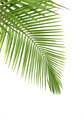Leaves of palm tree - PhotoDune Item for Sale