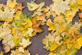 Background of the yellow leaves of autumn - PhotoDune Item for Sale