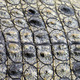 Close up of crocodile skin - PhotoDune Item for Sale