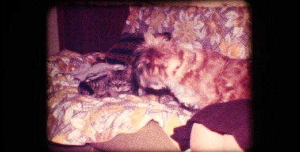 VideoHive Vintage 8mm of Woman Petting Dog And Cat 3262233
