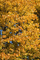 Beautiful autumn tree  leaves - PhotoDune Item for Sale