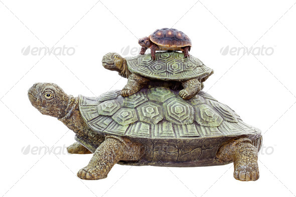 Red Footed Tortoise on Top - Stock Photo - Images