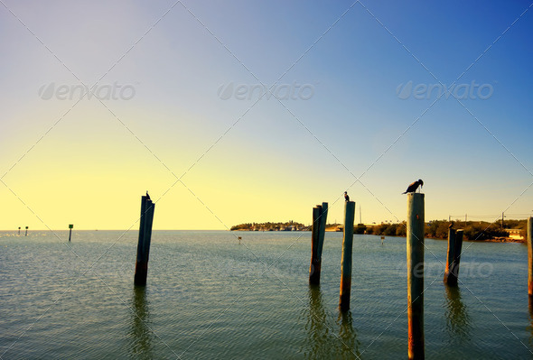 Birds perched on posts - Stock Photo - Images