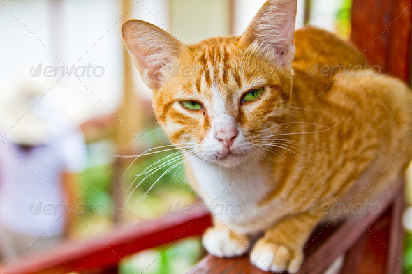 Orange cat - Stock Photo - Images