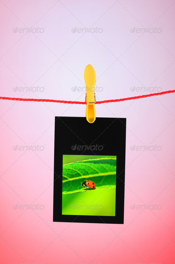Ladybug on the hanging photo - Stock Photo - Images