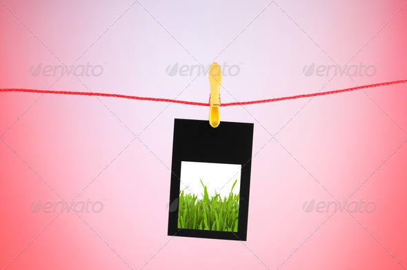 Grass on the photo - Stock Photo - Images