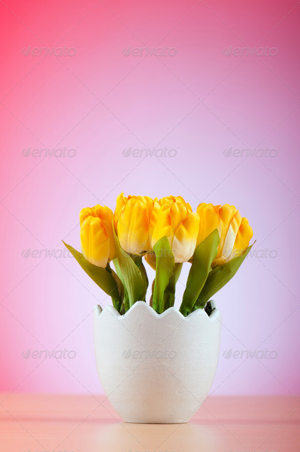 Colorful tulip flowers in the white pot - Stock Photo - Images