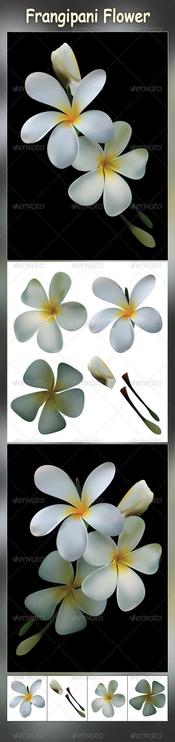 GraphicRiver Frangipani Flower 3270430