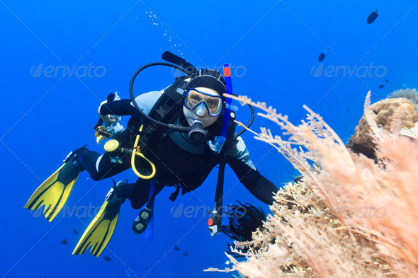 Scuba diver - Stock Photo - Images