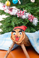 Tio de Nadal, Christmas Tradition in Catalonia - PhotoDune Item for Sale