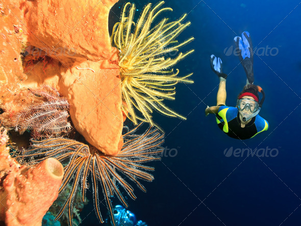 Diver underwater - Stock Photo - Images