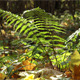 Branch Of A Fern Sways In The Wind - VideoHive Item for Sale