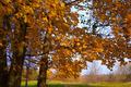 Gold Autumn - PhotoDune Item for Sale