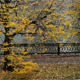 Autumn In A City - VideoHive Item for Sale