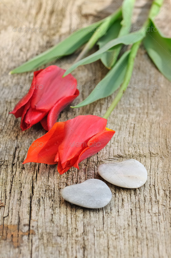 red tulips and stone hearts - Stock Photo - Images