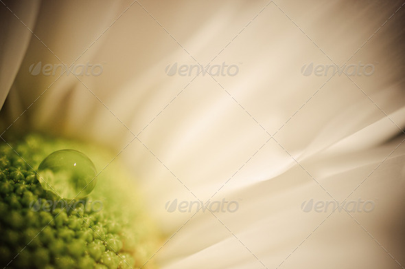 White Bliss - Stock Photo - Images