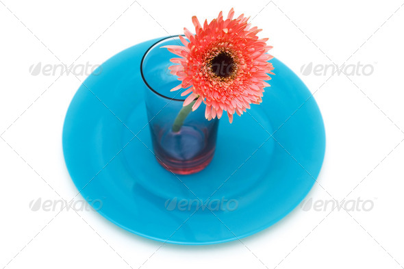 Flower and red plate isolated on the white - Stock Photo - Images