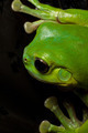 Tree frog splat - PhotoDune Item for Sale