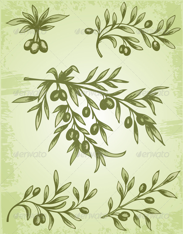 GraphicRiver Vintage Olive Branch 3295373