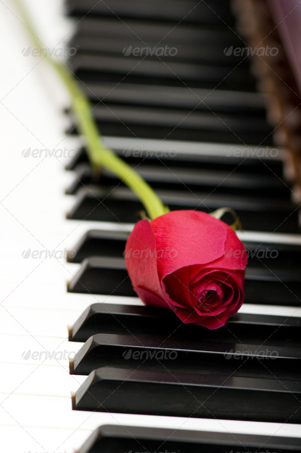 Romantic concept - red rose on piano keys - Stock Photo - Images