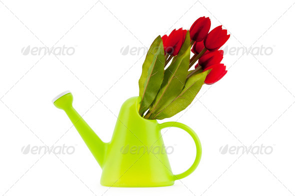 Gardening concept - Tulips and watering can - Stock Photo - Images