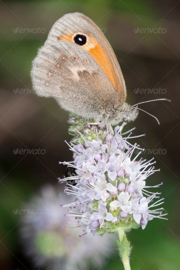 Butterfly resting on flower - Stock Photo - Images