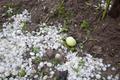 Hail Storm Disaster in garden - PhotoDune Item for Sale