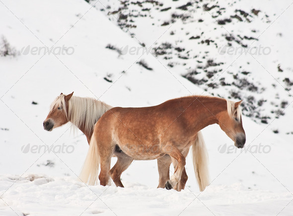 Horses in the mountains - Stock Photo - Images