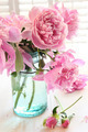 Pink peonies in glass jar - PhotoDune Item for Sale