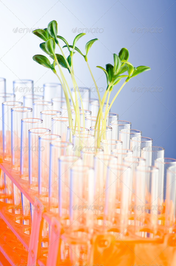 Experiment with green seedlings in the lab - Stock Photo - Images